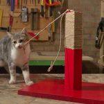 gioco per gatti in legno