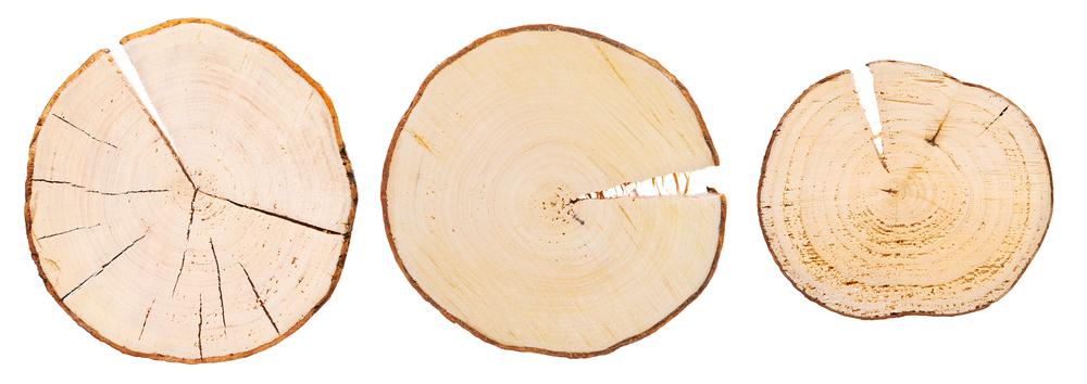legno a poro chiuso sezione