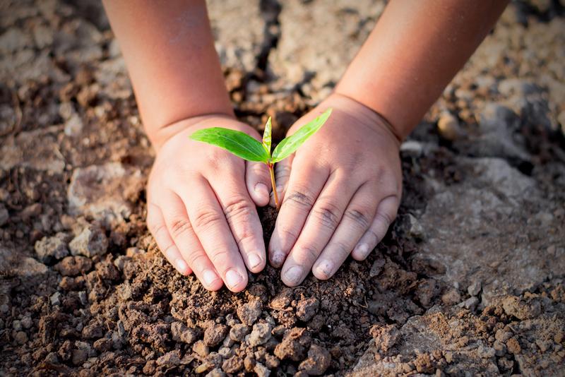 cosa fare per aiutare il pianeta con le piante