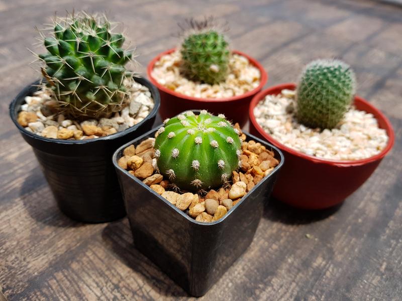 mini serra in legno per piante