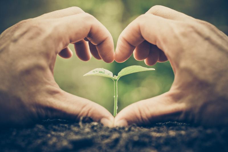 piantare un seme per far crescere un albero