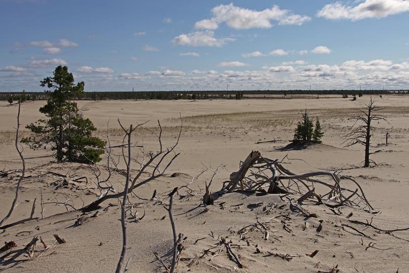 disboscamento illegale e desertificazione