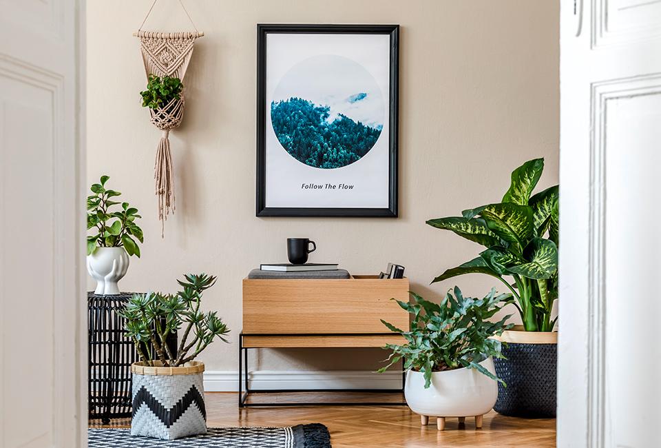 Disporre le piante in casa: grandi vasi