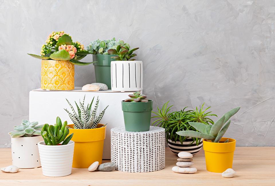 Disporre le piante in casa: composizione