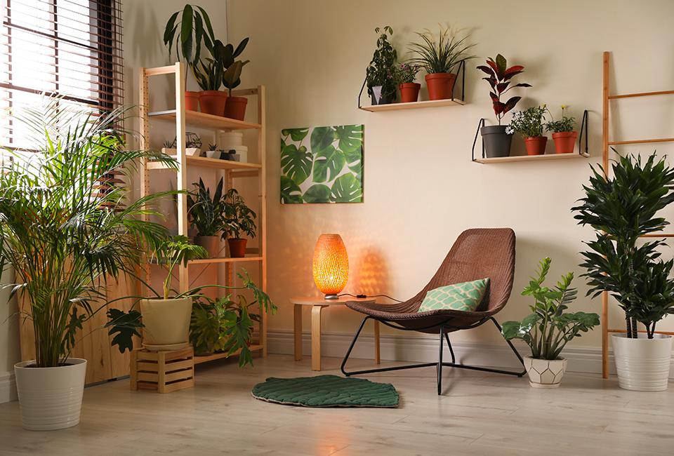 Disporre le piante in casa: un angolo verde