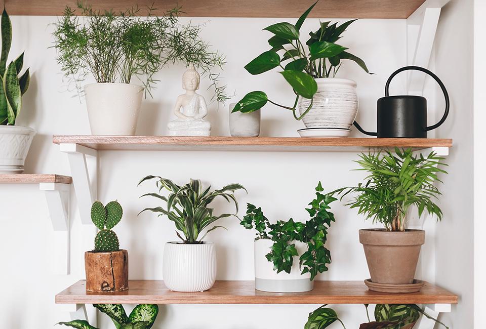 Disporre le piante in casa: usare le mensole