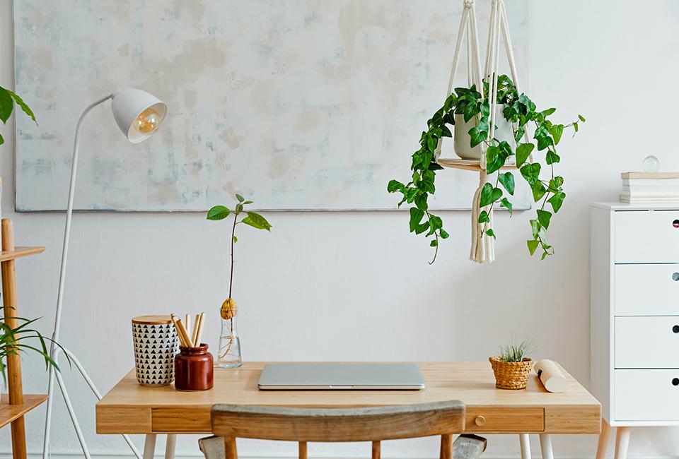 Disporre le piante in casa: piante a sospensione