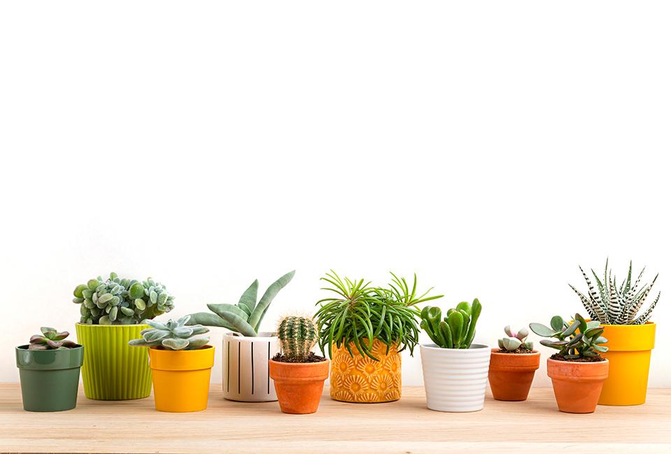Disporre le piante in casa: piccole piante in vasi differenti