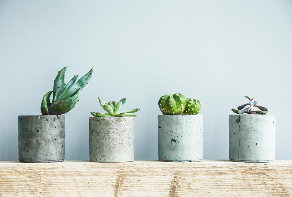 Disporre le piante in casa: ripetizione