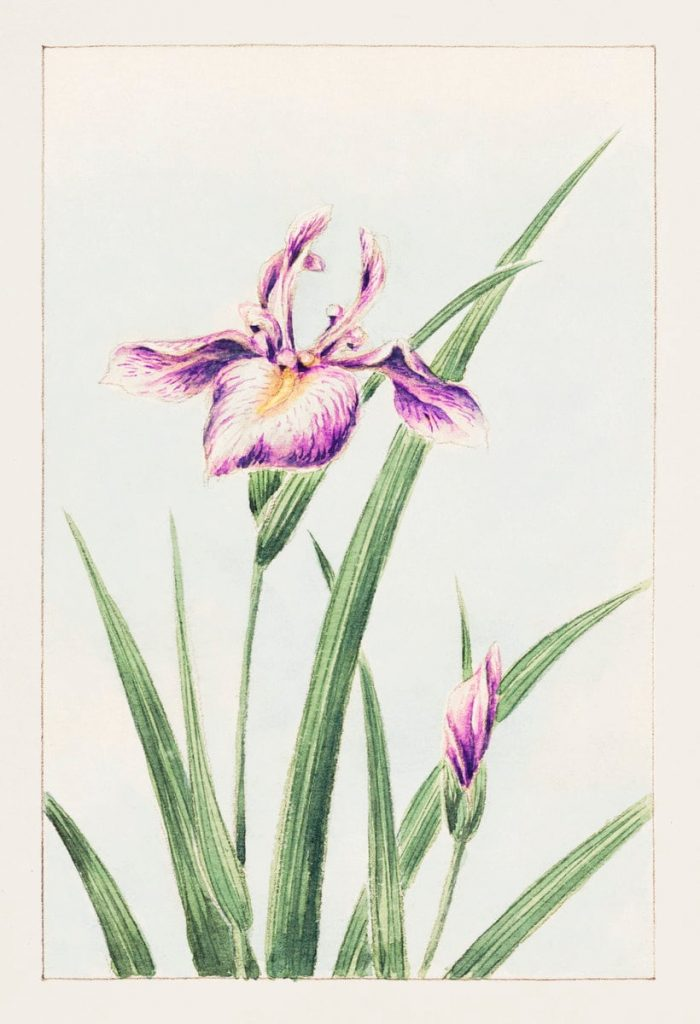 Immagini romantiche per San Valentino: fiori di Megata Morikaga