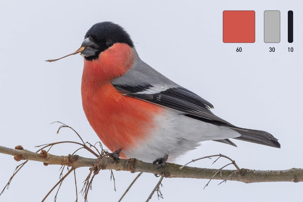 """Anche gli uccelli spesso """"obbediscono"""" alla regola del 60-30-10"""