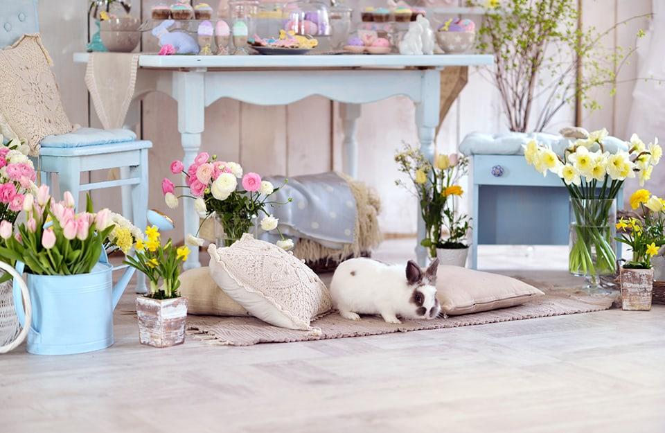 Angolo domestico in stile shabby chic. Ci sono mobili in tinta azzurro pastello, moltissimi fiori, cuscini in tessuti e colori naturali e un coniglio vivo